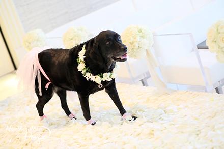 AOYAMA Wedding Photo Gallery 03